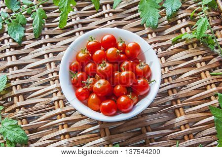 Tomatoes in bowl, ripe and red harvest, on wicker picnic basket with tomato leaves - with text / copy space.