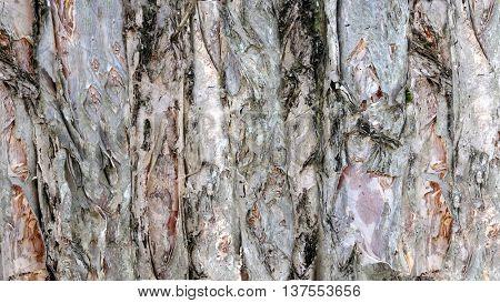 Organic Bark Textures