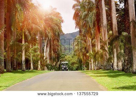 Palm alley in botanical garden Peradeniya. Kandy Sri Lanka.