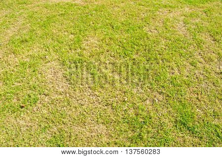 photo closeup gree grass background, top view
