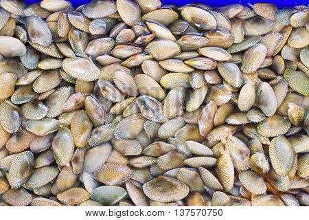 A background of fresh clams for sale at a market, The seafood on the market.