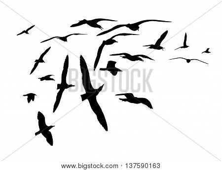 Black on white silhouettes. Flock of sea gull birds.