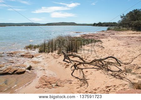 Peaceful Murchison River landscape with rugged sandstone, grasses and leafless branches on the riverbanks under a blue sky with clouds in Kalbarri, Western Australia. poster