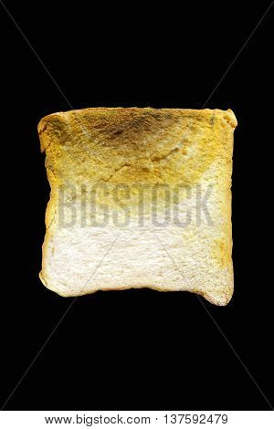 modly on bread with back background rotten bread poster