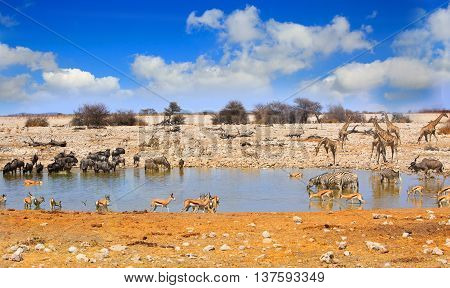 A variety of animals around a busy waterhole in Etosha national park, with giraffes, zebra, wildebeest, impala, gemsbok oryx against a blue cloudy sky