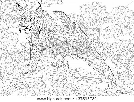 Zentangle stylized cartoon hunting wildcat (lynx american bobcat caracal) ready to attack. Hand drawn sketch for adult antistress coloring book page with doodle zentangle floral design elements.
