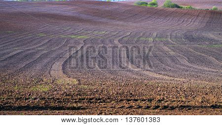 Brown field in spring after spring sowing.