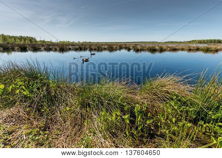 Moorland in northern germany with a couple of ducks