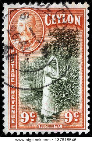 LUGA RUSSIA - JUNE 25 2016: A stamp printed by CEYLON shows image portrait of King George V against view of Plucking Tea circa 1936.
