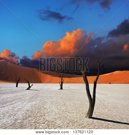 Dead Camelthorn Trees against red dunes and dramatic sky in Deadvlei Sossusvlei. Namib-Naukluft National Park Namibia Africa