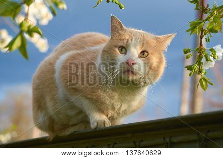 Red cat is on the fence outdoor