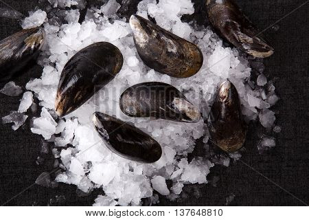 Luxurious seafood background. Shells on ice on black stone table top view. Culinary seafood background.