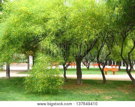 Verano. Los rayos de sol iluminan las hojas de los bonitos árboles. Parque céntrico de  ciudad. Zaragoza. España.