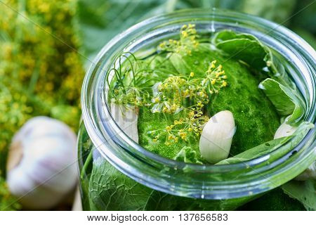 Home made pickles in brine with garlic dill and horseradish