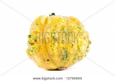 Pumpkin From Latin America