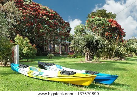 Two kayaks and Pohutukawa tree in blossom. Bay of islands, New Zealand