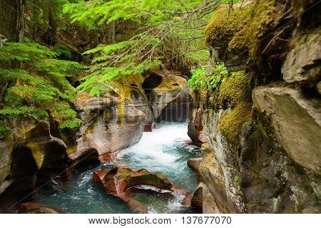 Avalanche Gorge ,glacier National Park ,montana, Usa