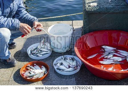 Turkey - Istanbul at the Bosphorus bonito bluefish mackerel sardines sea bass and other bottom fish hunt. Migration time increases in fishing catch fish. poster