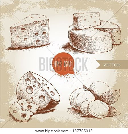 Hand drawn different type of cheese set. Edam mozzarella cheese with basil leafs round cheese head triangle of cheese. Vector organic food illustration. Vintage design. Sketch style.
