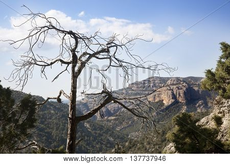 Mountains of Los Ports de Beseit. Teruel province
