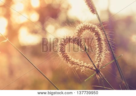 Just as the grass It has value.. She remembers : Heart