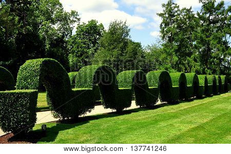 Portsmouth RI - July 16 2015: Unique clipped privet topiary arched hedge at Green Animals Topiary Gardens