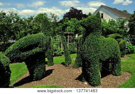 Portsmouth Rhode Island - July 16 2015: Fanciful topiary animals fashioned from English Privet at Green Animals Topiary Gardens