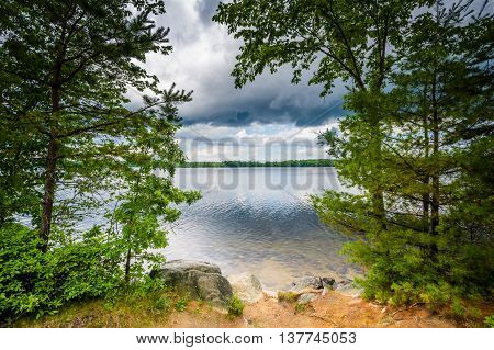 Trees Along The Shore Of Massabesic Lake, In Auburn, New Hampshire.