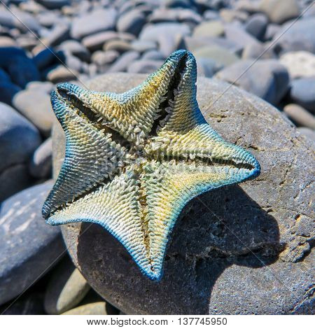 Starfish on a rock on a stoney beach