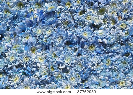 Blue flowers. Usable as a background