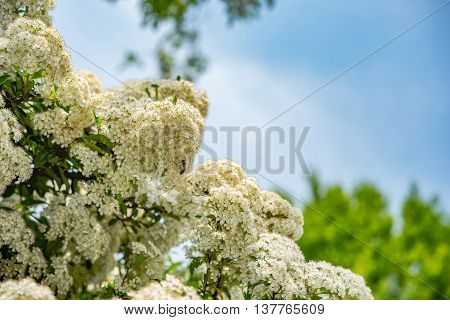 Blossom tree over nature background in Germany