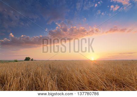 sunset in the desert / wilderness bright sky before sunset