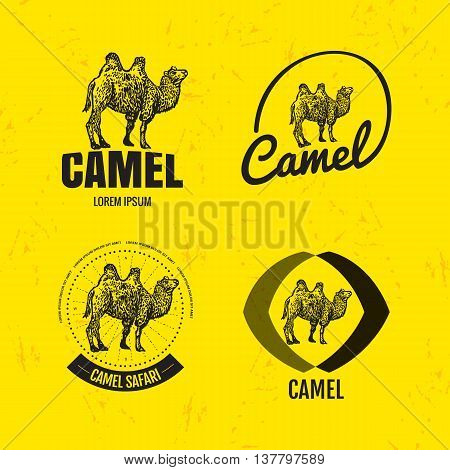 Vector colorful set with desert camel. The camel as main element of logotypes on yellow background. Engraves vector design graphic element emblem logo sign identity logotype