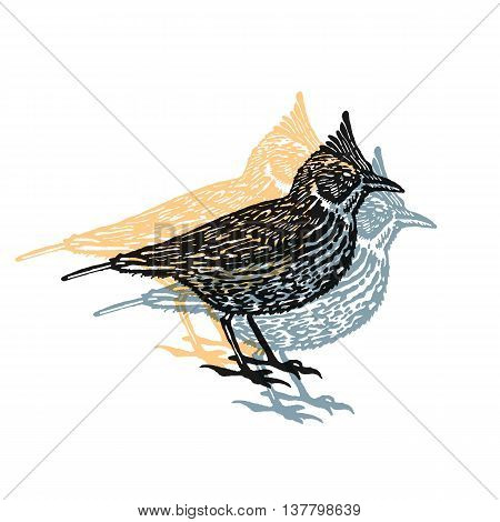 Crested lark bird sign. Desert bird. Vector engraved Illustration. Linocut Crested lark Isolated on white background
