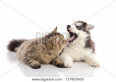 Cat and dog together lying on a white backgroundisolated