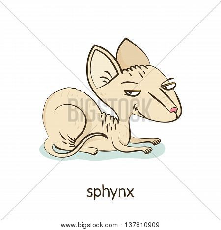 Sphynx. Cat Character Isolated On White
