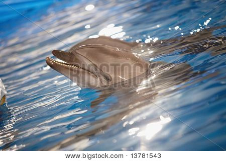 Close-up of dolphin head in water