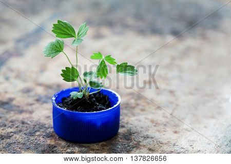 Save green earth, recycling products conceptual photography. sprout plant growing in blue plastic bottle cap. macro view pattern and texture leaves. Aged rusty metal background