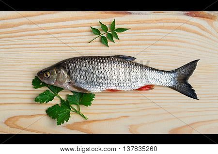 big chub and green leaves on a background of wood