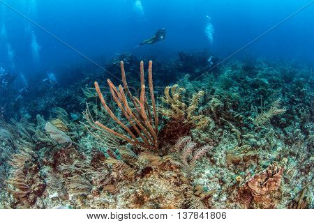 Scuba diving at Ambergris Caye in San Pedro, Belize