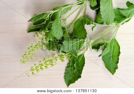 Basil Leaf Isolated On Wooden Board Background