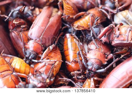 The scarab or Beetle and the name in scientifically to Stem-boring grub or Longhorned Beetles This insect tropicsIn Thailand Popular used to cook food is delicious. poster