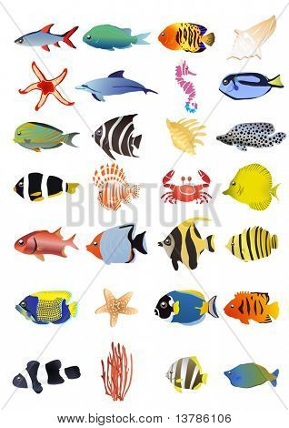 Collection of marine animals, vector illustration
