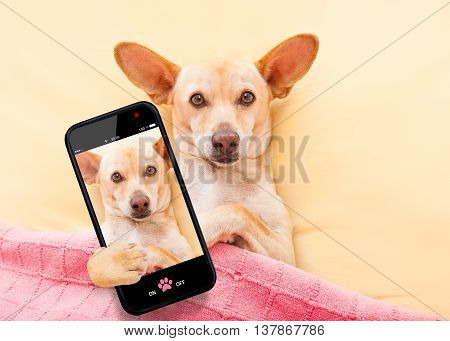 Chihuahau Dog Selfie