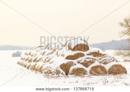 Straw Fodder Bales in Winter: straw that were left after the fall harvest are used as animal feed and bedding during the winter months