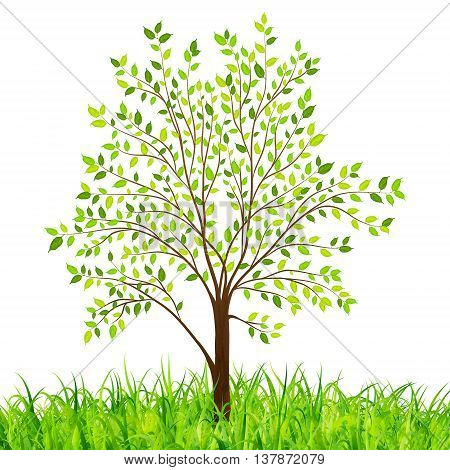 Nature background with green tree and grass vector