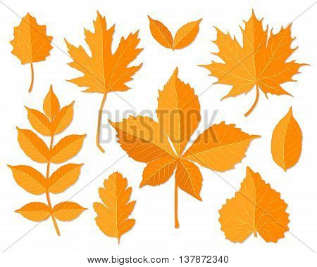 Autumn leaves set on white background vector