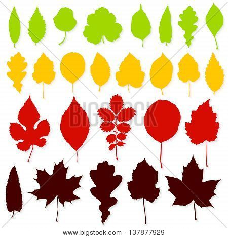 Colorful leaves set on white background vector
