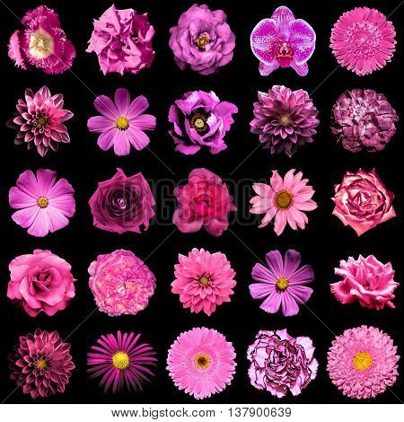Collage of natural and surreal pink flowers 25 in 1: peony dahlia primula aster daisy rose gerbera clove chrysanthemum cornflower flax pelargonium marigold tulip isolated on black poster