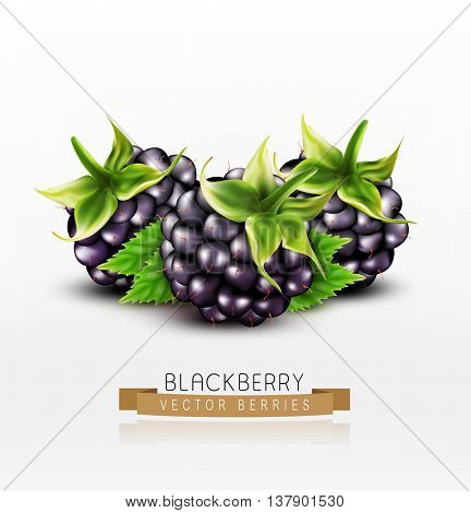 Vector blackberries isolated on white background